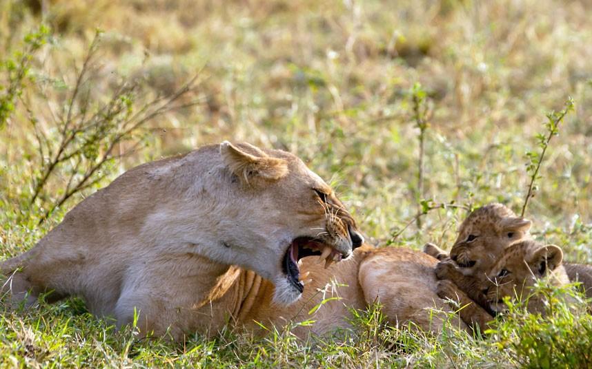 Don't anger Mom